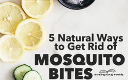 Dược liệu tự nhiên đánh bay nốt muỗi đốt