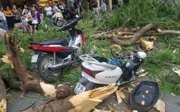 Hà Nội: Nhiều phụ nữ, trẻ em bị thương do cây phượng lớn bất ngờ đổ trên phố