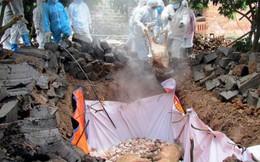 Nam Định tiêu hủy 80 con lợn do dịch tả lợn châu Phi