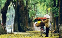 Hà Nội rực vàng mùa cây thay lá
