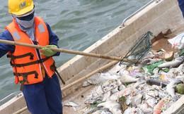 Video: Công nhân oằn mình vớt cá chết nổi trắng hồ Tây