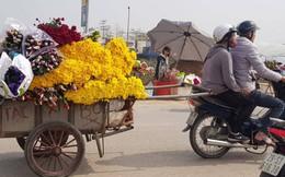 Thủ phủ hoa tươi lớn nhất Hà Nội hối hả vào vụ Tết