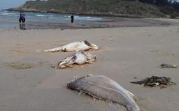 Bộ TN&MT tổ chức họp kín vụ cá chết tại miền Trung