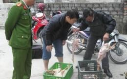 Phát hiện cơ sở dùng nhựa thông làm sạch lông vịt