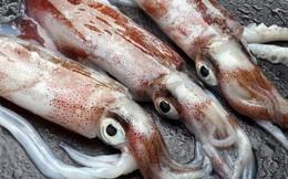 Cách nhận biết mực, bạch tuộc không tẩm hóa chất bằng mắt thường