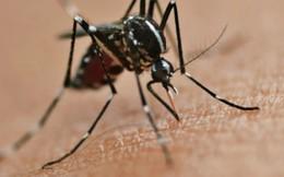 Hàn Quốc ghi nhận ca nhiễm virus Zika đầu tiên