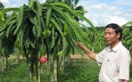 HTX chuyên tìm đầu ra cho trái cây đặc sản