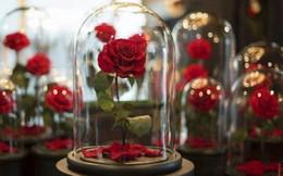 Sát ngày Lễ tình yêu, thị trường quà tặng Valentine vẫn im ắng