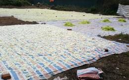 Sân phơi mứt kề bên nhà vệ sinh ở Hà Nội