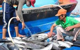 Đầu tháng 9 sẽ công bố hải sản miền Trung ăn được hay chưa