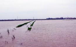 Gần 70.000 ha cây trồng bị ngập úng do ảnh hưởng cơn bão số 3