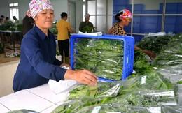 Đà Nẵng kết nối cung ứng thực phẩm an toàn với các tỉnh, thành phố