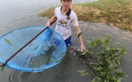 Bỏ công nhân về học nghề bắt tôm tép bằng lá cây