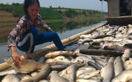 Nhà máy đường vỡ bể chất thải ra sông Bưởi