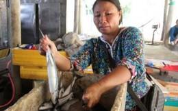 Ngư dân điêu đứng vì tin cá nục nhiễm chất cực độc