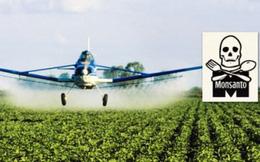 Hàng loạt quốc gia sẽ cấm thuốc diệt cỏ Monsanto gây ung thư