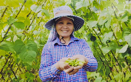 Dự án rau Tây Bắc mang đến cơ hội mới cho phụ nữ dân tộc