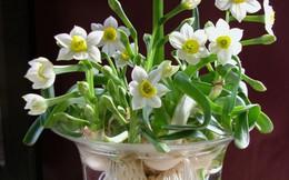Lưu ý các loại cây hoa đẹp nhưng độc với bà bầu