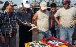 Đà Nẵng hỗ trợ 1,9 tỷ đồng cho ngư dân