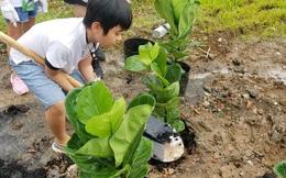 Trồng 30.000 cây xanh góp phần phủ xanh Việt Nam