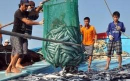 Bồi thường sự cố môi trường biển đợt 1 phải xong trước Tết Nguyên đán