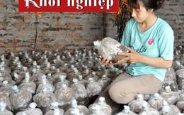 Thu nhập 20 triệu đồng mỗi tháng từ trồng nấm rơm