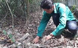 Thông tin thêm về vụ việc phát hiện hơn 300 xác thai nhi ở Cà Mau