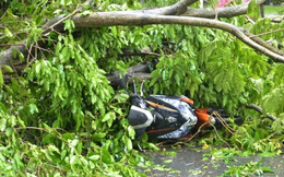 Bị cây xanh đổ gây chấn thương, ai phải chịu trách nhiệm bồi thường?