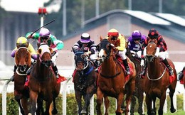 HĐND Hà Nội ra nghị quyết về quy hoạch trường đua ngựa ở Sóc Sơn