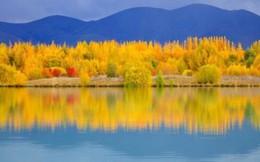 Thả hồn cùng vẻ đẹp mê hoặc của mùa cây thay lá