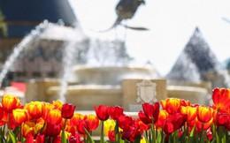 Bà Nà Hills tưng bừng mở hội hoa xuân