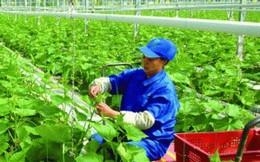 Cả nước hiện có 13 ngàn hợp tác xã nông nghiệp