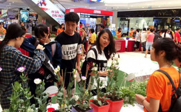 Ngày hội Đổi giấy lấy cây xanh bảo vệ môi trường