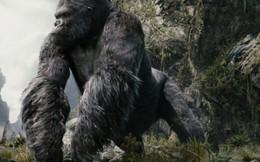 Mô hình dự kiến Kong ở hồ Gươm chỉ là tấm phông 3D