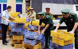 Quảng Ninh: Bắt giữ đối tượng vận chuyển hơn 22.000 con gà giống nhập lậu