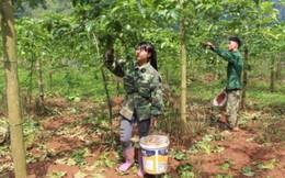 Vốn chính sách NHCSXH tiếp sức cho phụ nữ vùng núi thoát nghèo bền vững