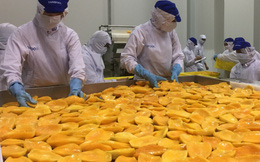Vận hành nhà máy chế biến nông sản đạt chuẩn Lead Silver của Mỹ