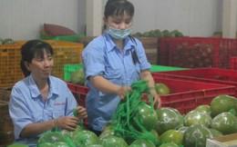 Công nhân còn nửa thu nhập vì nông sản thất mùa