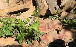 Tự ý chặt cây rừng, chủ khu du lịch bị khởi tố