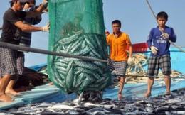 Xã đầu tiên của Quảng Trị nhận bồi thường do sự cố môi trường biển
