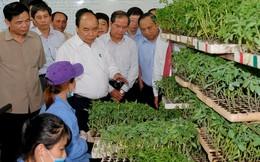Ngày 30/7, Thủ tướng chủ trì Hội nghị thúc đẩy đầu tư vào nông nghiệp