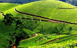 """Ghé thăm Sri Lanka để ngắm """"biển"""" trà xanh trên núi"""