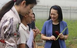 Mô hình trồng rau sạch ở Bắc Ninh lãi 13 triệu đồng/sào/năm