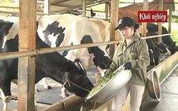 Nuôi bò sữa quy mô lớn, nông dân Vĩnh Phúc được vinh danh Nông dân Việt Nam xuất sắc 2019