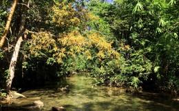Lội suối, ngồi thiền giữa rừng Tánh Linh