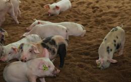 Có gì bên trong trang trại chăn nuôi sạch nhất Việt Nam?