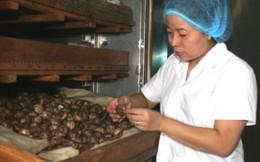 Sản xuất viên tiểu đường từ thảo dược của nữ thạc sĩ Hóa
