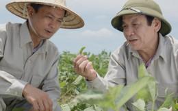 Việt Nam xuất hiện vùng trồng đậu nành dược liệu đủ điều kiện xuất khẩu sang châu Âu và Mỹ