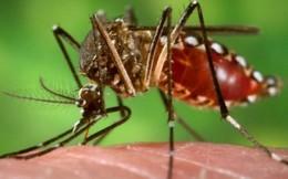 Chuyên gia chỉ cách phân biệt bị nhiễm Zika và cảm cúm