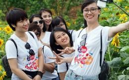 Tuần lễ hoa hướng dương tại Fansipan: lạc bước chẳng muốn về